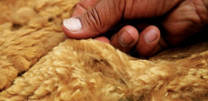 神之纖維——『安第斯山脈皇后』駱馬的絨毛